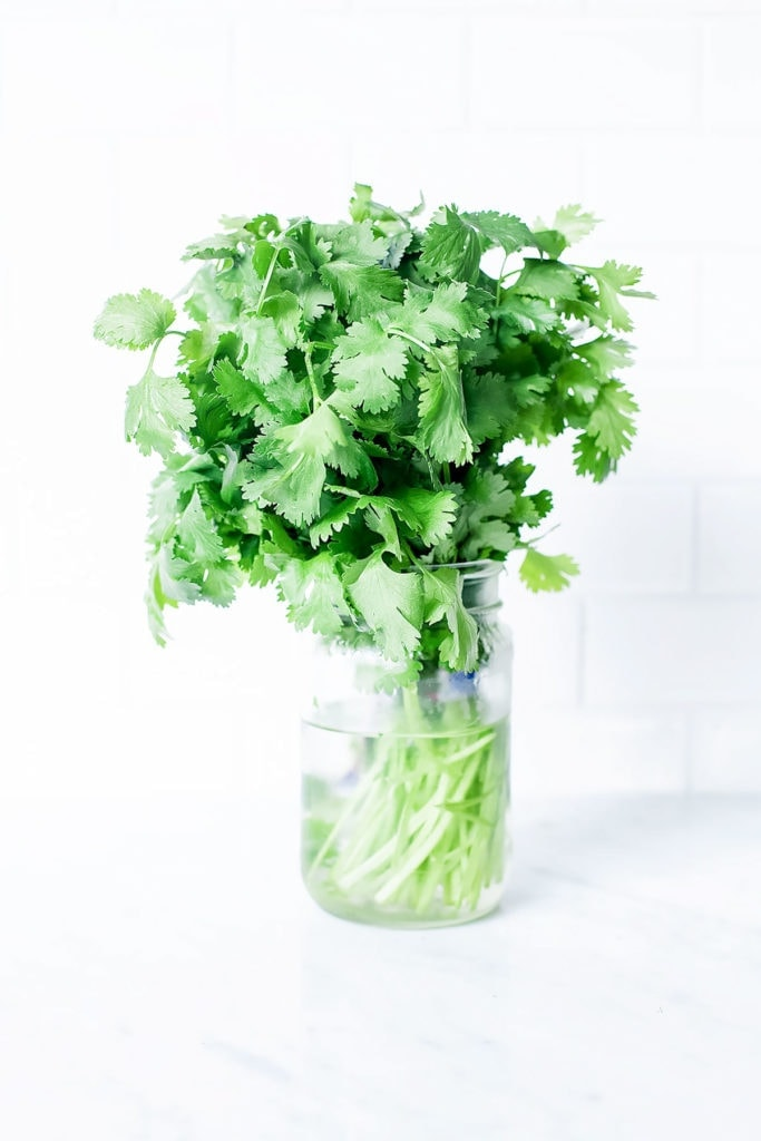 Fresh cilantro in a mason jar with water and a white background.