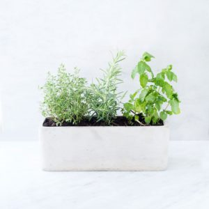 Herbs in a windowsill planter.