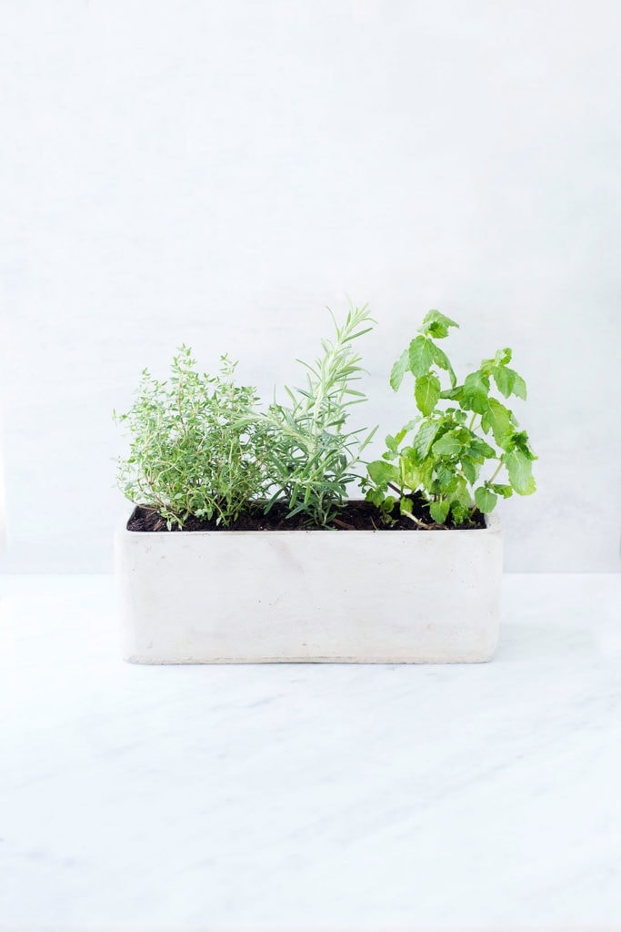 How To Grow A Simple Kitchen Herb Garden Loveleaf Co