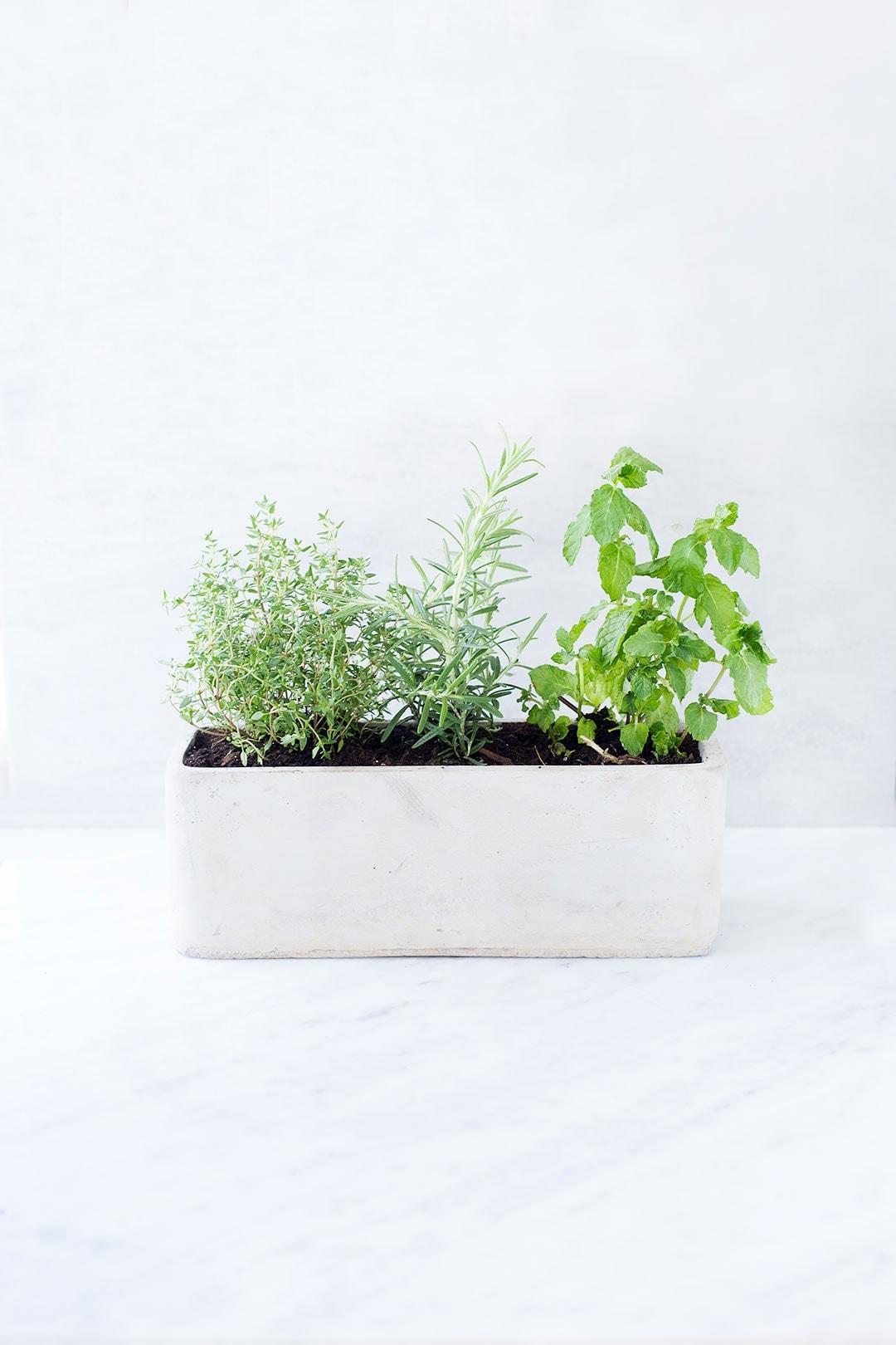 Grow A Simple Kitchen Herb Garden